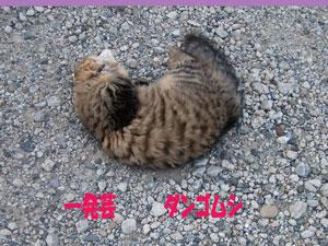 2008-07-02じゃり3.jpg