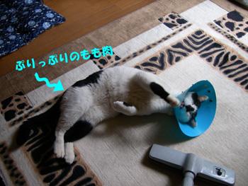 2008-12-21-4.jpg
