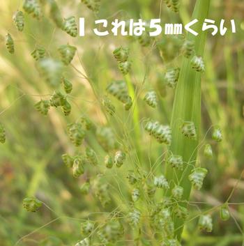 2009-05-20_1477.jpg