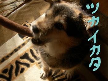 2009-11-08_1891.jpg