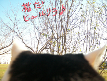 2009-11-23_1943.jpg
