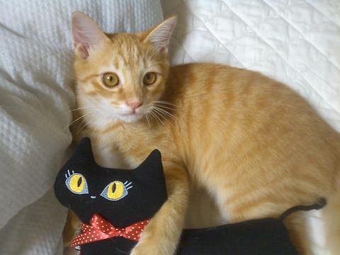 黒猫ゆきちゃんと.JPG