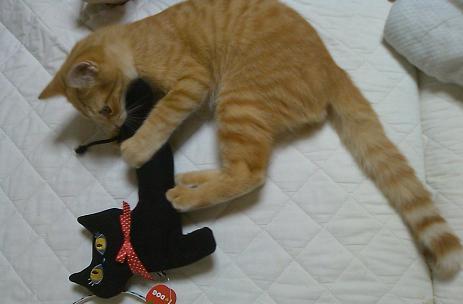 黒猫ゆきちゃんと2.JPG