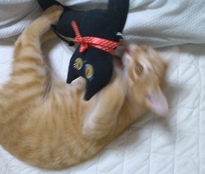 黒猫ゆきちゃんと3.JPG