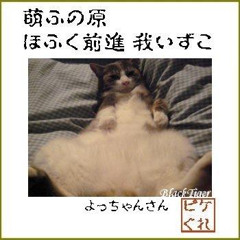 yoccyan-san色紙.jpg